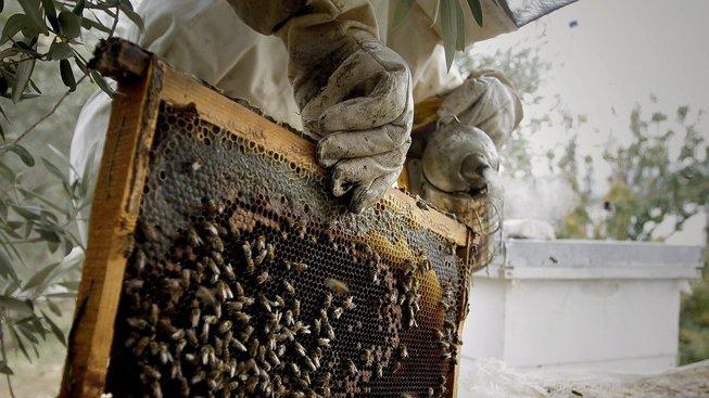 Exkluzivní med stojí 22 tisíc korun za litr. Ilustrační snímek