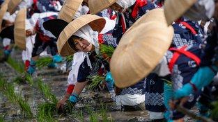 Rýže je v Japonsku posvátná, proto každou sezonu zahajuje slavnostní ceremoniál výsadby