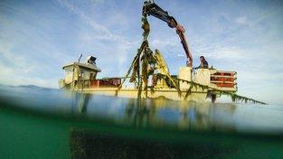 Ušně jsou oblíbená pochoutka čínských gurmetů. Na moře se tak v JAR noc co noc vydávají lodě pytláků, aby ráno předali svůj úlovek překupníkům. Ilustrační snímek