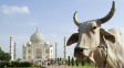 Tádž Mahal bude stát v 'jiném' městě. Kvůli muslimům mění Indie názvy měst