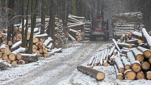 Ministerstvo zemědělství chce kvůli kůrovcové kalamitě změnit lesní zákon. Ilustrační snímek
