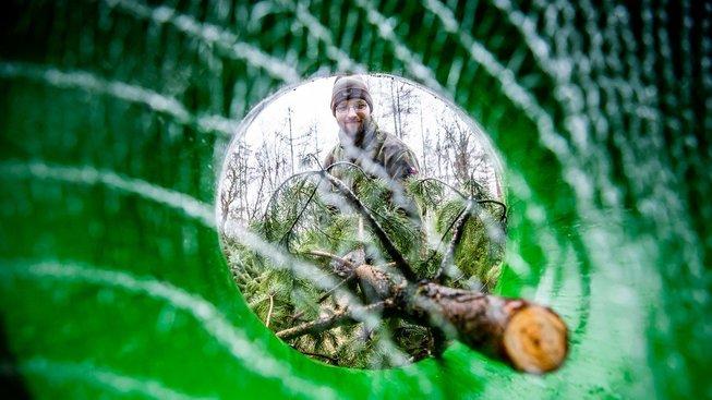 Zatímco v Česku je o živé stromky stále zájem, v Americe převažují umělé