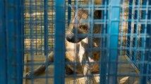 Zvířata zachráněná z válečných oblastí