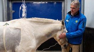 Vyhlášený koňský chirurg Olivier Lepage