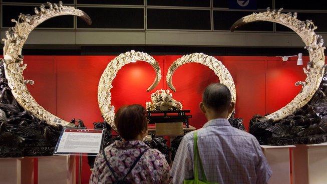 Slonovina z mamutů je zejména v Číně velmi oblíbená