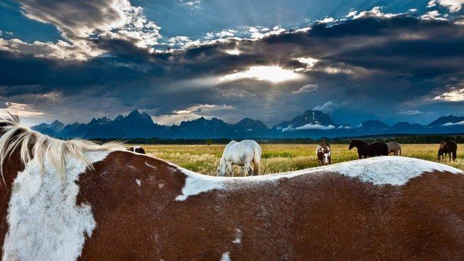 Národní park Grand Teton nabízí jedny z nejkrásnějších přírodních scenérií v rámci USA