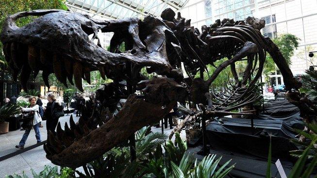 Tato kostra Tyrannosaura byla předmětem aukce v roce 2013