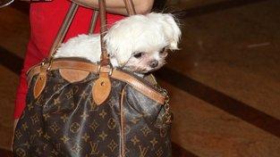 Hollywoodští mazlíčci sice mají veškerý luxus, jsou však často spíš doplněk, než zvířata