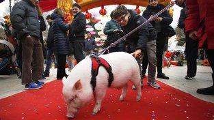 Oslavy čínského Nového roku v Římě
