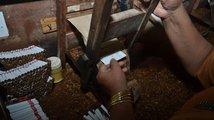 Tabákový průmysl v Indonésii