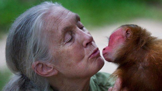 Jane Goodallová se studiem primátů zabývá desítky let