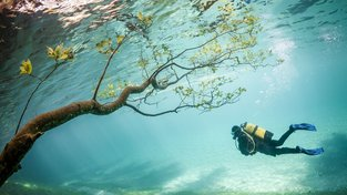 Přízračný půvab utopených cest. Zelené jezero se v jistý čas rapidně zvětší - a spolkne park