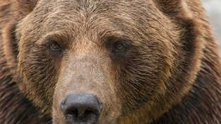 Do čela české justice míří silná medvědice