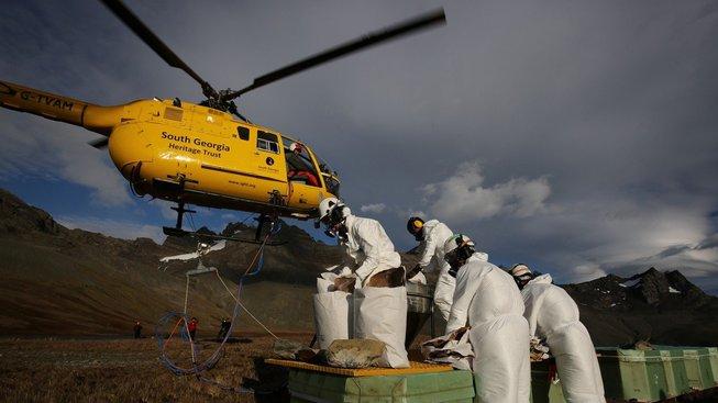 V Jižní Georgii se s potkany a krysami nepárali - během pěti let pomocí jedů svržených z vrtulníků všechny vyhubili