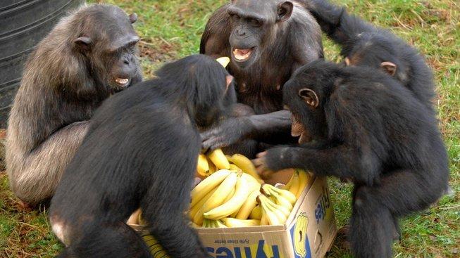 Starosti o banány přenechme odborníkům