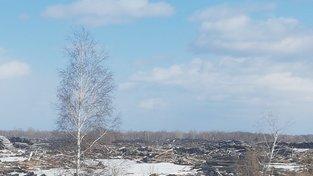 Pokácené stromy v Tomské oblasti na Sibiři