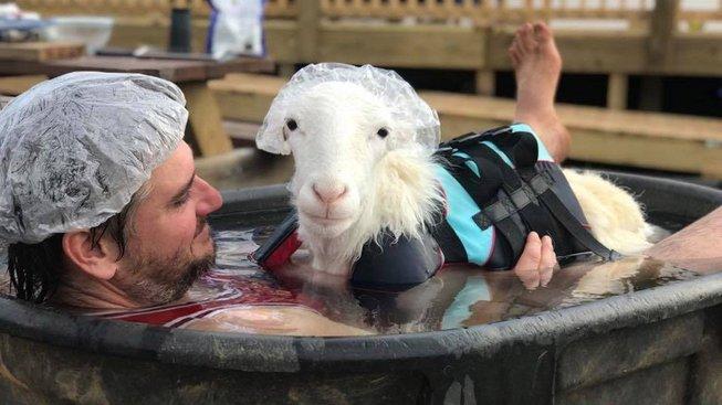 Koza si užívá lázeň se svým zachráncem