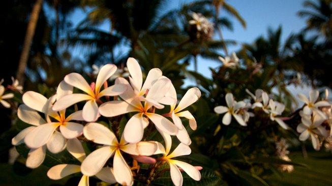 Nejhůře postiženým místem je dle studie Havaj
