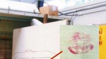Polibek na Warholově obrazu