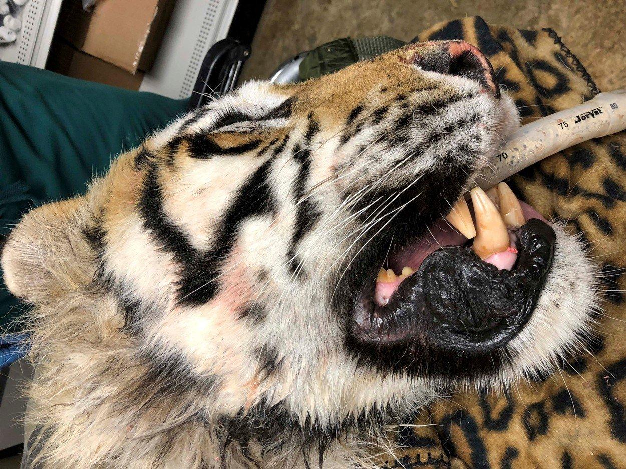 Zvířecí zubař