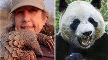 Luskouni vs. panda. Pražská kavárna dráždí Číňany