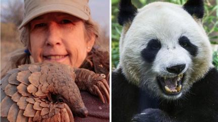 Komentář: Luskouni vs. panda. Pražská kavárna dráždí Číňany