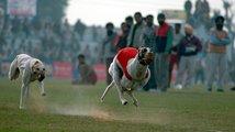 Indická soutěž