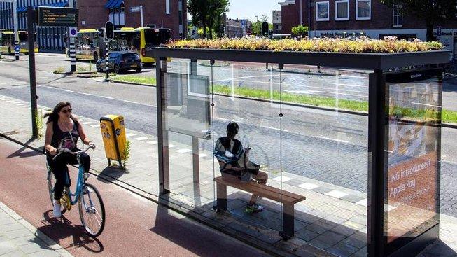 Střechy více než tři stovek autobusových zastávek v nizozemském Utrechtu se změnily v malé zahrádky