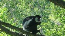Pražská zoo