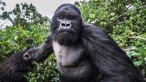 Měl by mistr těžké váhy šanci v souboji s gorilou?