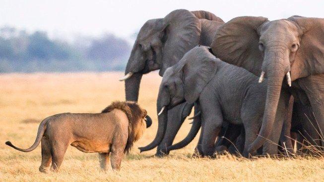 Lvi a sloni slaví svátek