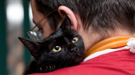 Zvířata díky šestému smyslu poznají blížící se nebezpečí i lidské nemoci
