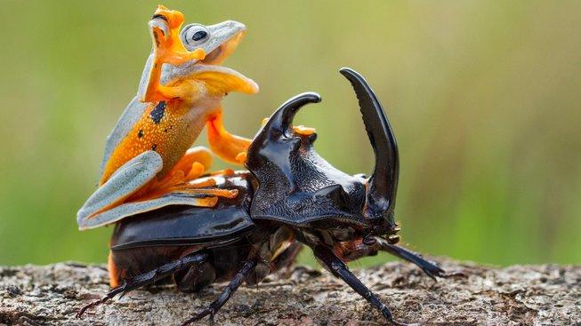 OBRAZEM: Když si zvířata stopnou 'taxi'