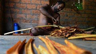 Skořice, neboli aromatická kůra skořicovníku, má bezpočet využití v různých oblastech