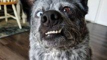 Nejšťastnější pes na světě