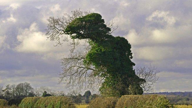 Tree-Rex