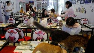 Kočičí kavárna v Pekingu