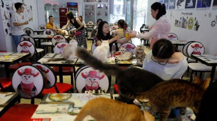 Kočičí kavárny nabízejí návštěvníkům netradiční zážitek a kočkám nový život