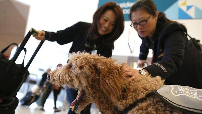 Úkolem psích terapeutů je zvednout náladu každému, kdo působí, že to potřebuje
