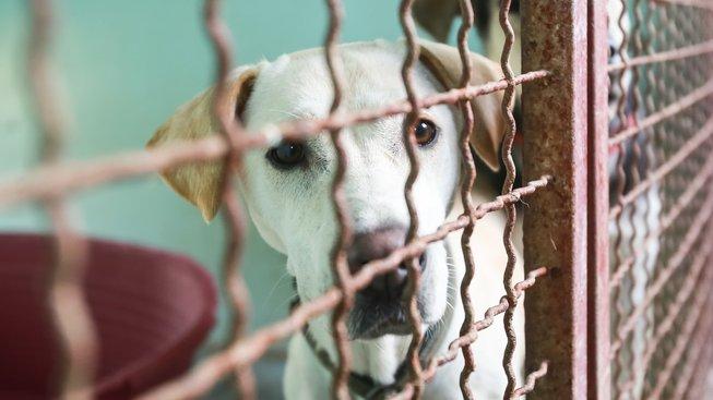 Pes z útulku: Poradíme vám, na co si dávat pozor