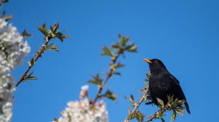 Díky koronaviru nemusí ptactvo překřikovat pouliční randál