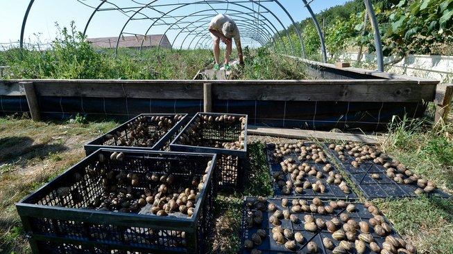 Andreas Gugumuck a jeho hlemýždí farma