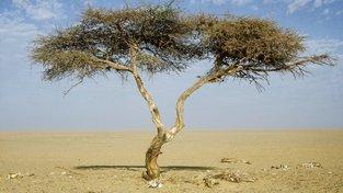 Strom v Ténéré