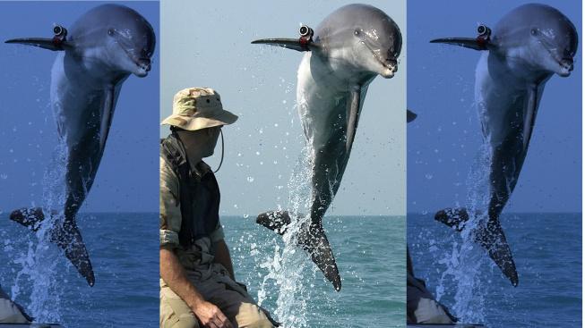 Delfín při výcviku