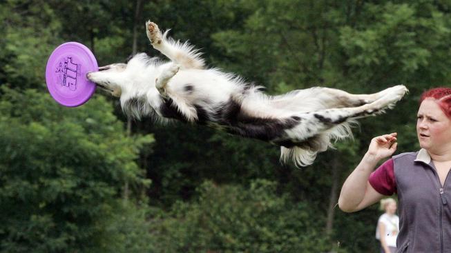 Ústecký psí festival, kvalifikace mezinárodní soutěže v dog frisbee