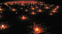 Vinice zahřívají zapálené svíčky