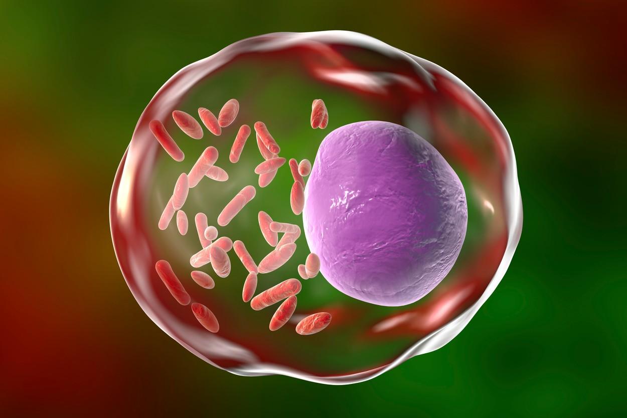 profimedia-0147319189 bacteria