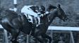 Sladký polibek smrti: Dostihový kůň vyhrál s mrtvolou v sedle