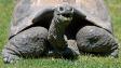 Proč se želvy dožívají tak vysokého věku