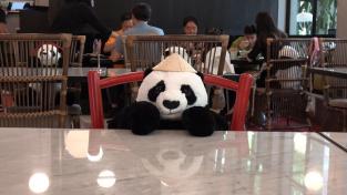 Plyšové pandy v restauraci Maison Saigon v Bangkoku se starají nejen o společnost, ale i o bezpečí hostů